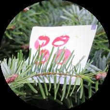 3 Sachets Treefresh Tabs + Verzorgingstips